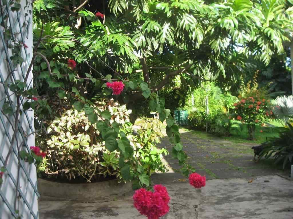 Jardin Creole Defense Patrimoine Reunion974 S Blog