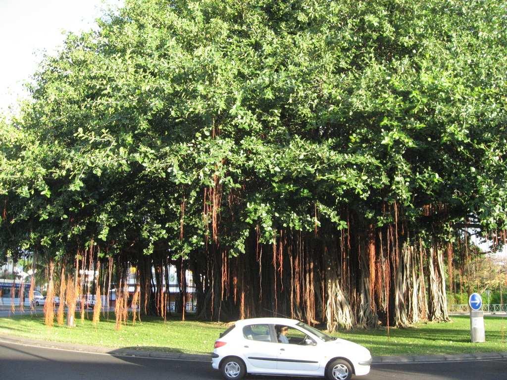 Aupr s de mon arbre je vivais heureux defense for Espace vert 974