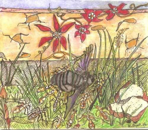 Cortège funèbre. (Illustration Huguette Payet).