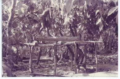 Scieurs de long malgaches