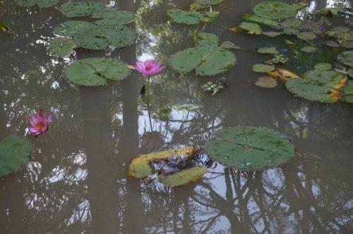 État actuel du jardin : le bassin de la désolation.