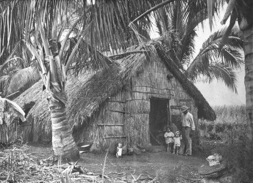 Les paillottes constituaient dans les années 50 plus de 60% de l'habitat réunionnais. (Coll. Y.Patel).